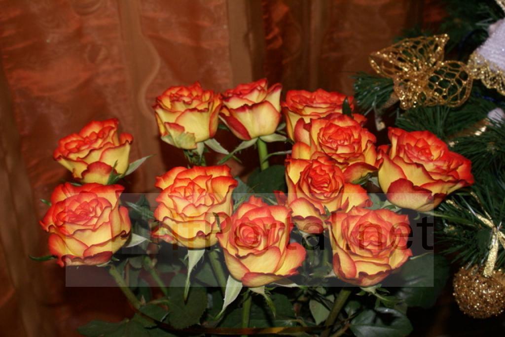 Квіти матері